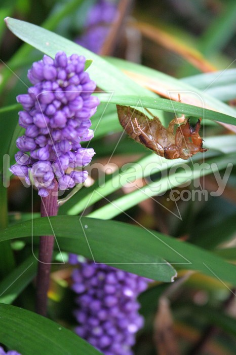 Cicada Skin on Flower Photo #830