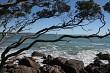 Trees, Rocks and Ocean