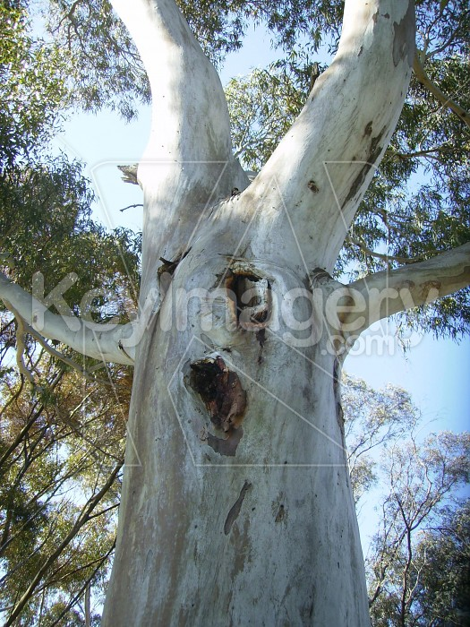 A face in the tree Photo #4698