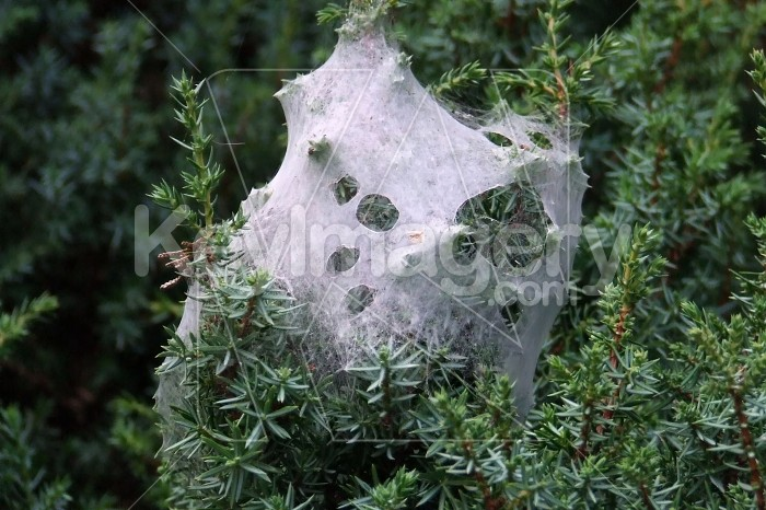 Spider web Photo #979