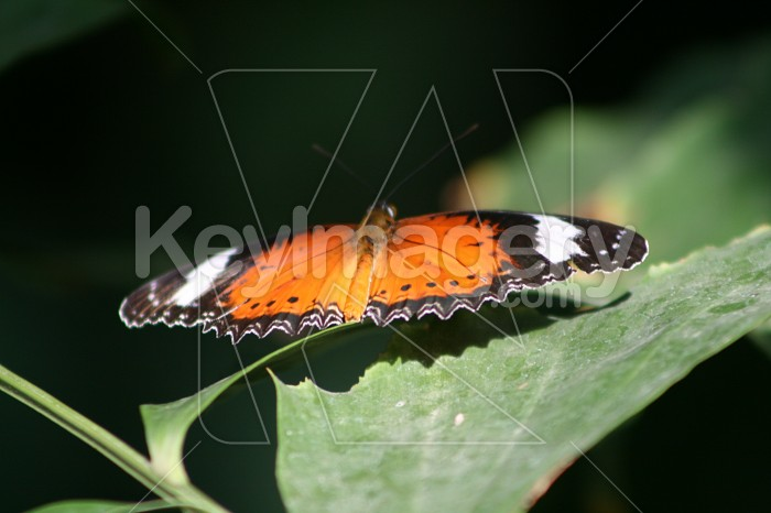 Butterfly Photo #1412