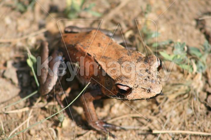 Frog Photo #1420