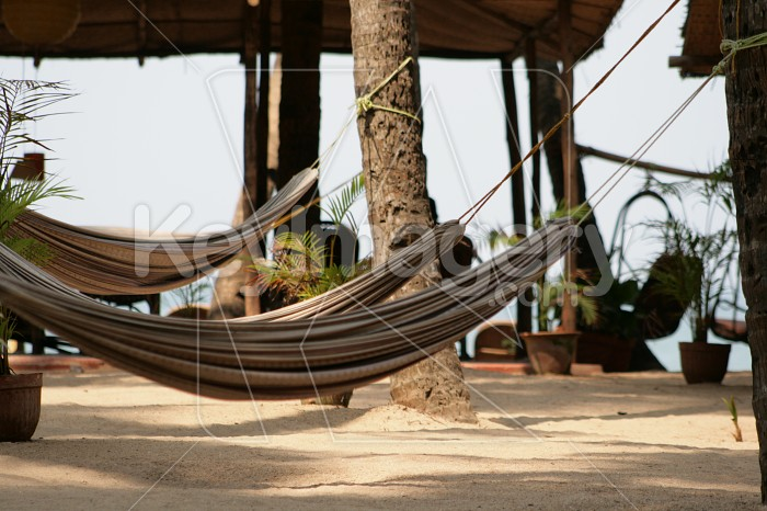 Hammock Photo #1403