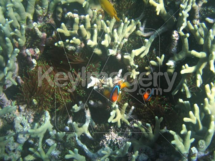 Anemone Fish Photo #1569