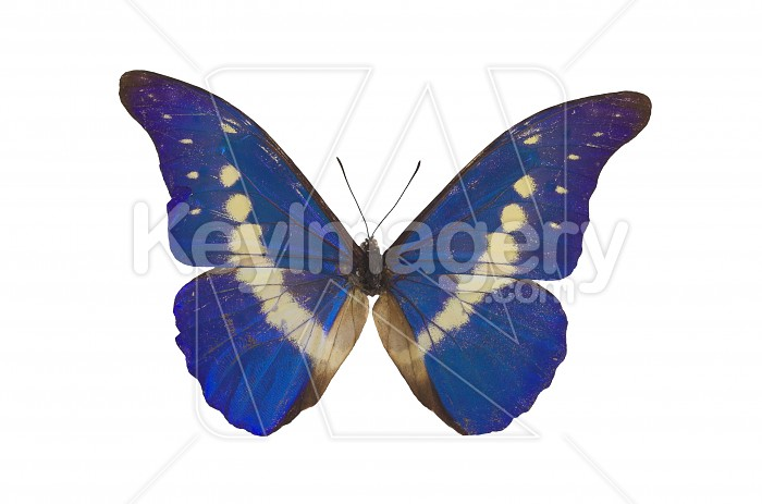 The Blue Butterfly Photo #1834