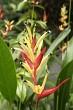 Fiji Flower 5