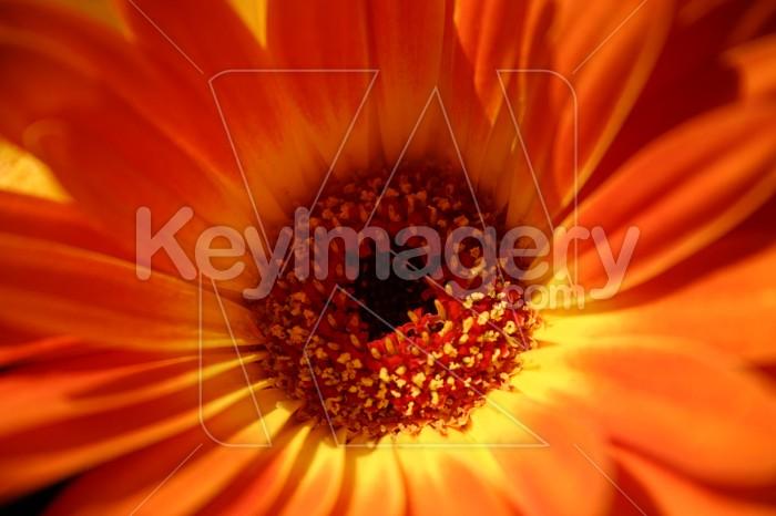 Orange flower Photo #2410